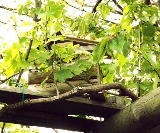 Galleria di montiemaresalus l 39 orto giardino giardino - L orto in giardino ...