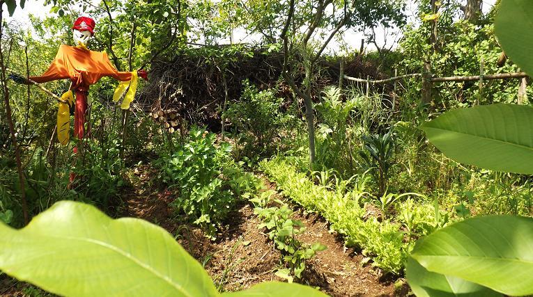 Galleria di montiemaresalus l 39 orto giardino orto - L orto in giardino ...